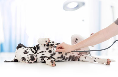 Hundeschule, Hundetraining, Hundeschule Butzbach, Medical Training, Tierarzttraining,