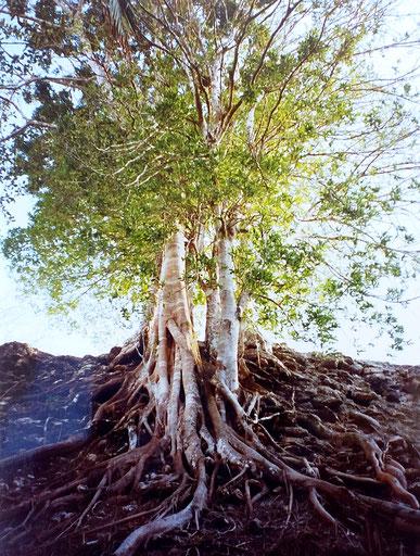 Telepathische Kommunikation mit einem Baum