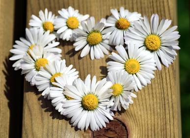 Homöopathie Infos Newsletter Blog Naturheilkunde Praxis Thielmann Heilpraktiker Frankfurt Heilpraktikerin Frankfurt Gudrun Thielmann Klassische Homöopathie Tipps Blumen Herz Danke