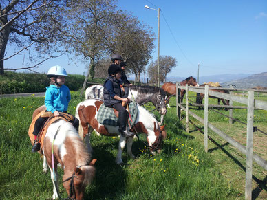 nos poneys
