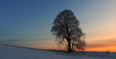 """Erzgebirge, Landschaft, Baum, Linde, Solitärbaum, """"Andreas Hielscher Fotografie"""", Naturwelten"""