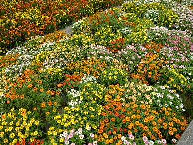 古井戸公園の夏花壇の様子(8月撮影)