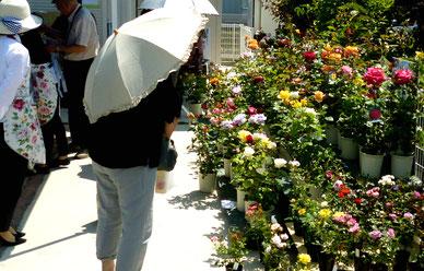 バラをはじめとする花苗の販売風景