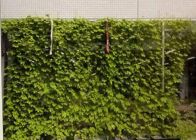 調査風景(2013年。大阪大学豊中キャンパス