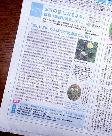 """""""白いたんぽぽ""""の記事(『City Life』2月号)"""