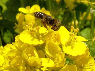 蜜蜂さんや蝶々さんも・・・