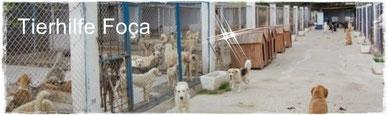 Foca,Izmir,Türkei Tierschutz, TESSA e.V., Nilgün Karsilyan,Mustafa Karsilayan,