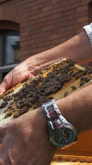 Bienenfleißig und sanft