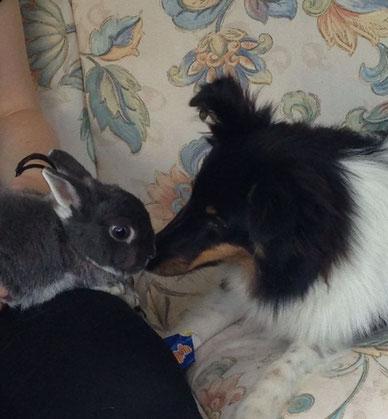 Banja beim schmusen mit seinem kleinen Langohrfreund
