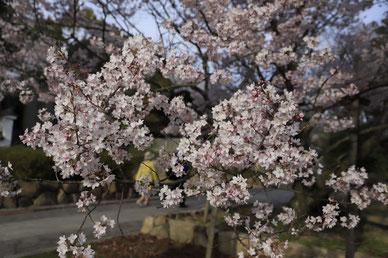 季節の風 2020年3月「早春の息吹」