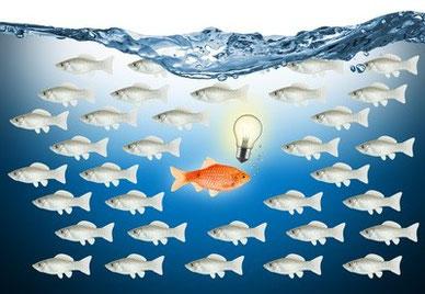 Neue Produkte und Dienstleistungen erfolgreich positionieren: Produktmanagement, Produktmarketing, Pre-Sales-Services. Produkte entwickeln,  einführen und auf dem Markt erfolgreich positionieren. Beratung & Service