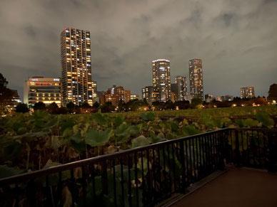 門倉真央撮影の夜景画像