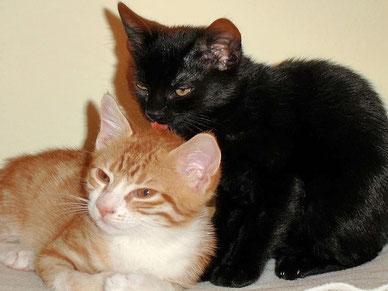 Jungkatzen knüpfen neue Kontakte