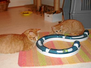 Training für die Mäusjagd