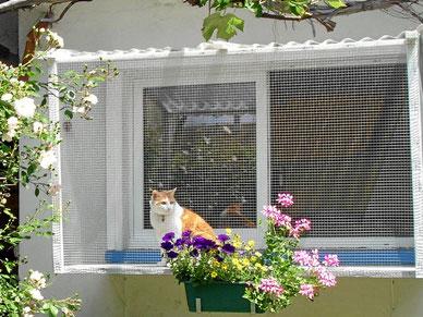 Katzenpension, Hotel pour les chats