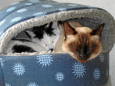 Doppelbetten mit komfortablen Matratzen
