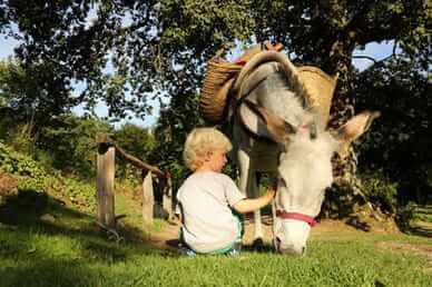 randonner âne en Limousin, Massif-Central / M Turin©CRT Limousin