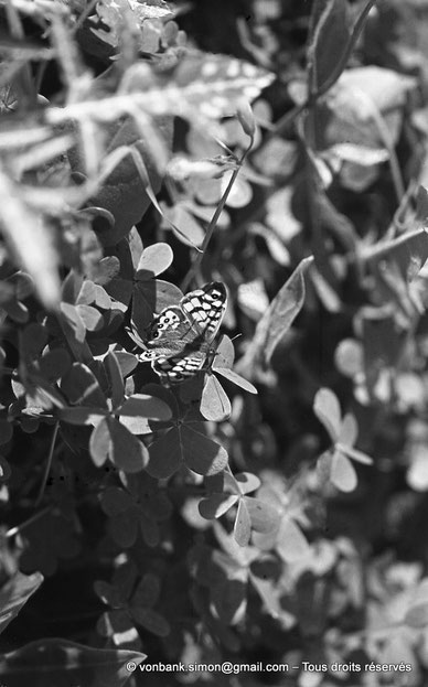 Annaba (Bône) : Papillon