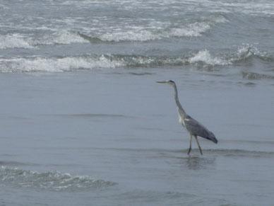 鳥も海水浴~?!
