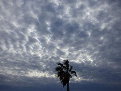 本日雲厚めなり。