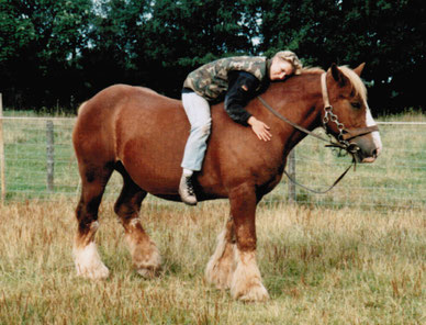 Ardennerstute Violetta und Judith im Herbst 1999
