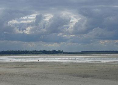Baie de Somme, marée, sortie, oiseaux, phoques, guide, flot, Le Crotoy, Côte Picarde