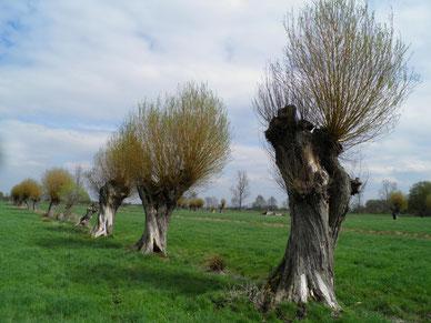 Landstrich bei Breitenrode