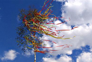 Ein blühender Mai Baum