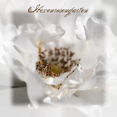 Rosen Hexenrosengarten Kräuter