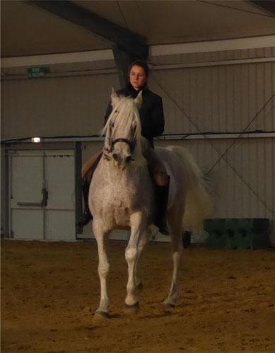 Saï el Nedj - cheval arabe, haute école à cru - Cheval passion 2017