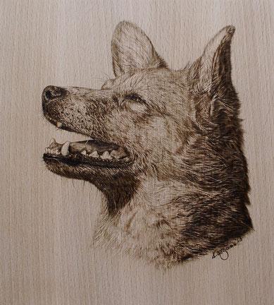 Mischlingshund auf Buchenholz