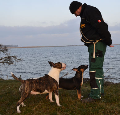 Bonita Sitara vom Baltic Bull  5 Monate