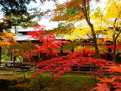 """新発田の紅葉名所『清水園』の見事な景色も旅の""""酒肴""""にふさわしい。"""