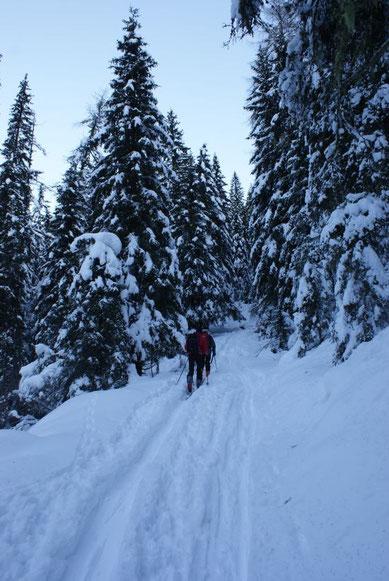 Aufstieg durch den Wald Richtung Falkert Schutzhaus