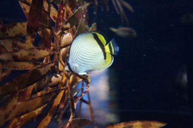 新江ノ島水族館にもいきましたよ~。ナイトアクアリウムというものをやってました!!