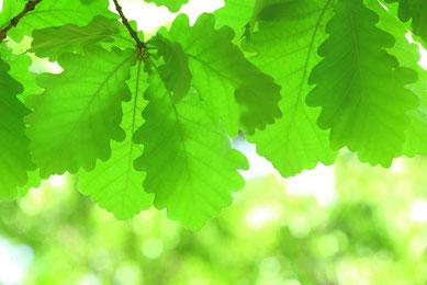 参考画像:柏の葉
