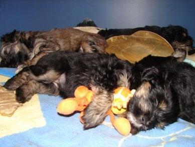 Binti schläft mit ihrem Lieblingsspielzeug