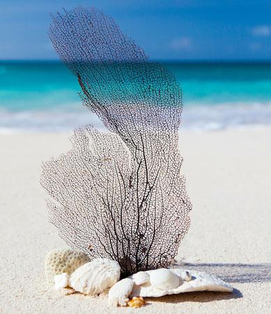 Koralle und Muscheln am Strand - Wozu Resilienz fördern?