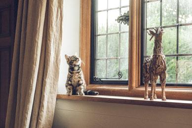 Katze sitzt auf der Fensterbank