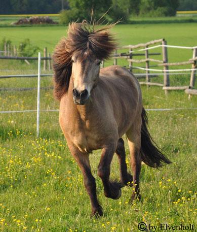 Workshop, Seminar, Islandpferde, Medizinpferde, Therapie mit Pferden München, Schamanismus und Pferde, Krafttier Pferd