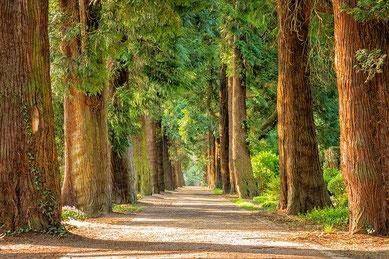 自然:森林