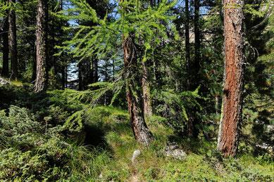 Wald, Baum, Bäume, Holz. Forst
