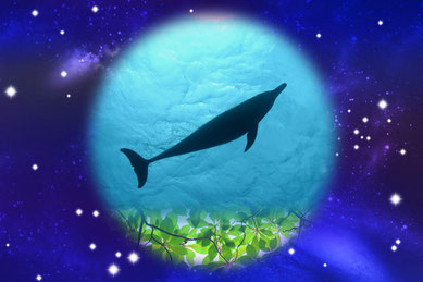 イルカ×プラネタリウムイメージ:御蔵島のイルカ