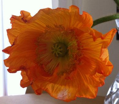 inspiriencer Sonntagsblume
