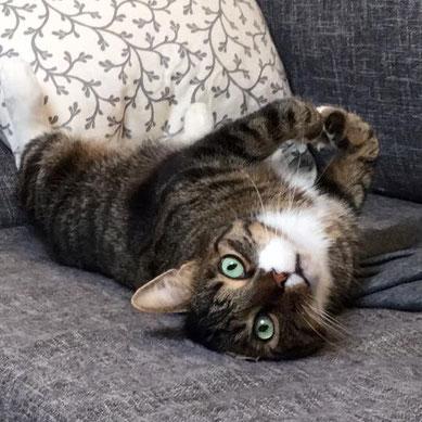 eine getigerte Katze liegt auf dem Rücken. Sie hat grüne Augen und weiße Pfotchen. Sie ist sehr entspannt.