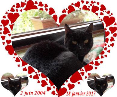 larges chattes noires ouvertes