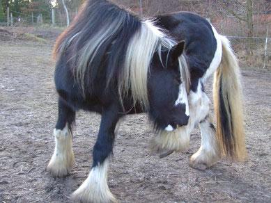 Vorsorglich sollte man künftig sehr achtsam sein, wenn das Pferd erneut unter Juckreiz leidet.