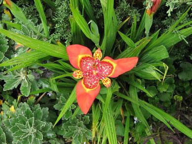Ecuadoriansches Hochland, Orchidee