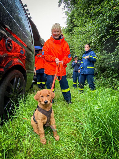 Golden Lining Einar, erstes THW Training mit 9 Wochen