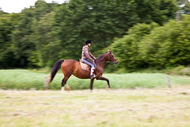 Vibraye équitation
